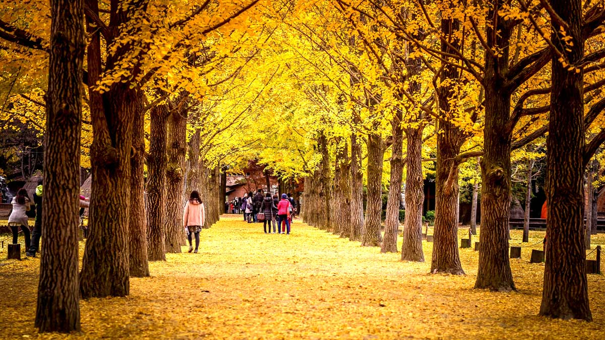 Nami Island with 2 Hour Gapyeong Zip Lining and Petite France